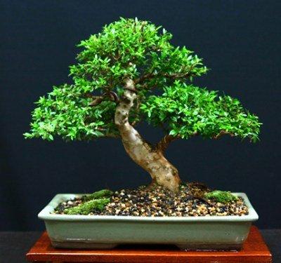 Грунт для денежного дерева своими руками